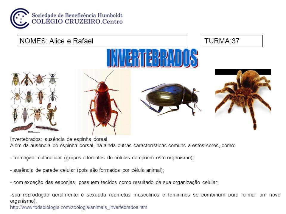 INVERTEBRADOS NOMES: Alice e Rafael TURMA:37