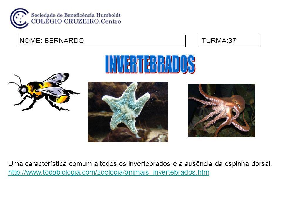 INVERTEBRADOS NOME: BERNARDO TURMA:37