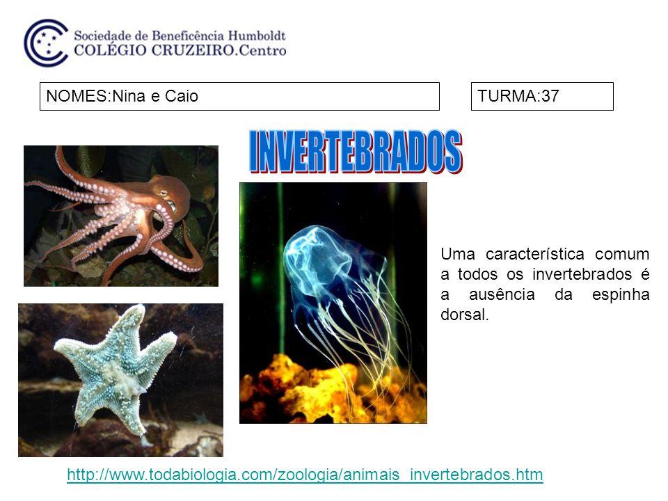 INVERTEBRADOS NOMES:Nina e Caio TURMA:37