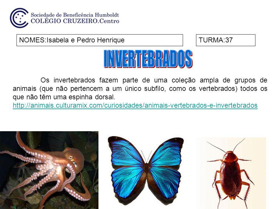INVERTEBRADOS NOMES:Isabela e Pedro Henrique TURMA:37