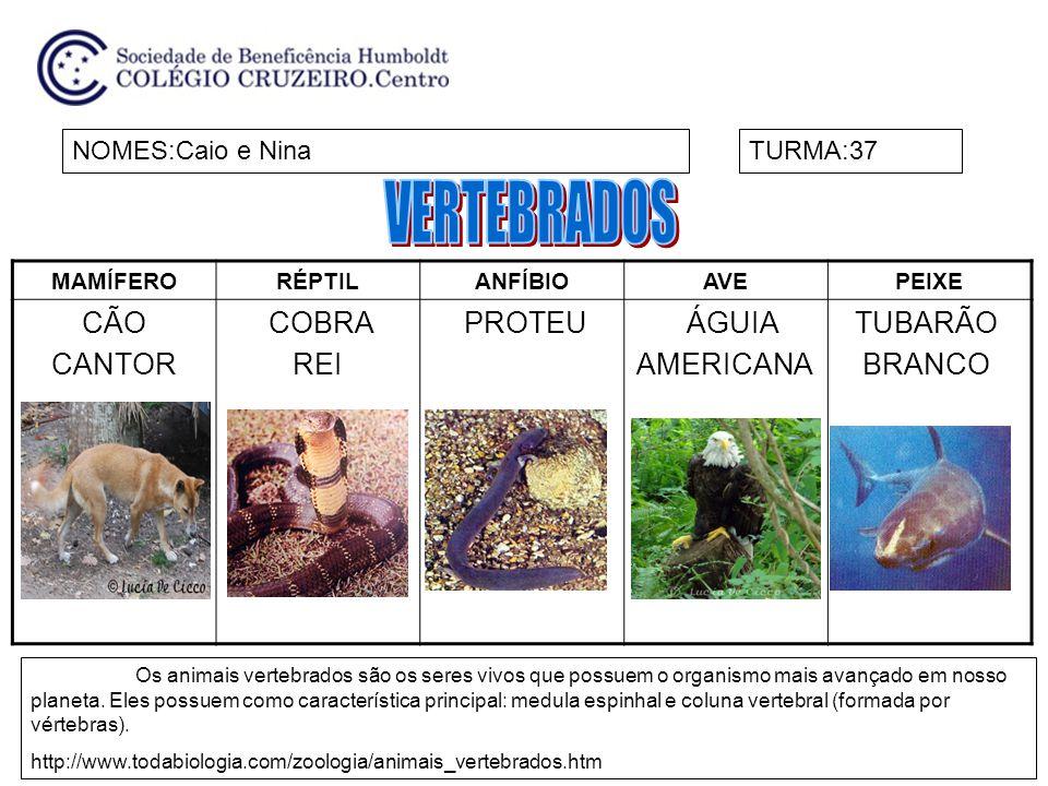VERTEBRADOS CÃO CANTOR COBRA REI PROTEU ÁGUIA AMERICANA TUBARÃO BRANCO