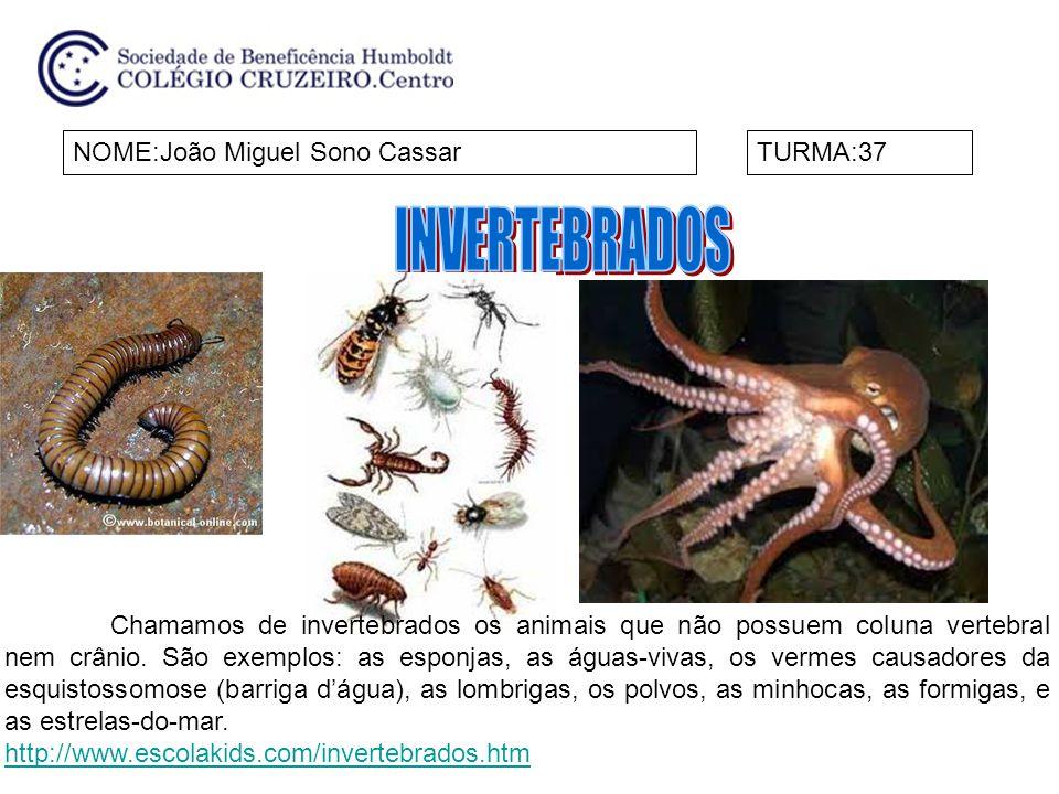 INVERTEBRADOS NOME:João Miguel Sono Cassar TURMA:37