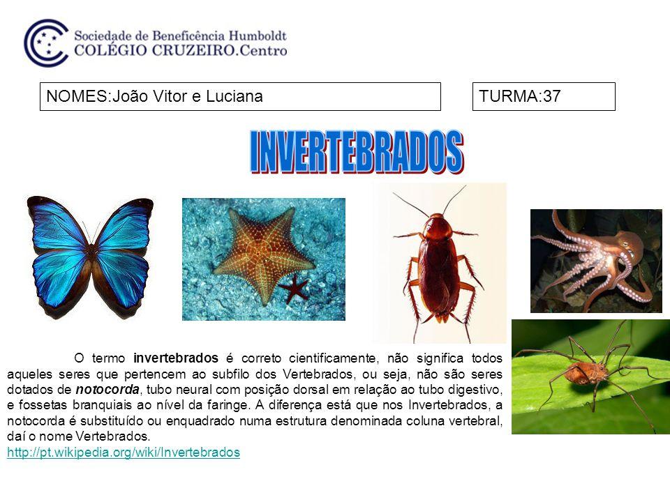 INVERTEBRADOS NOMES:João Vitor e Luciana TURMA:37