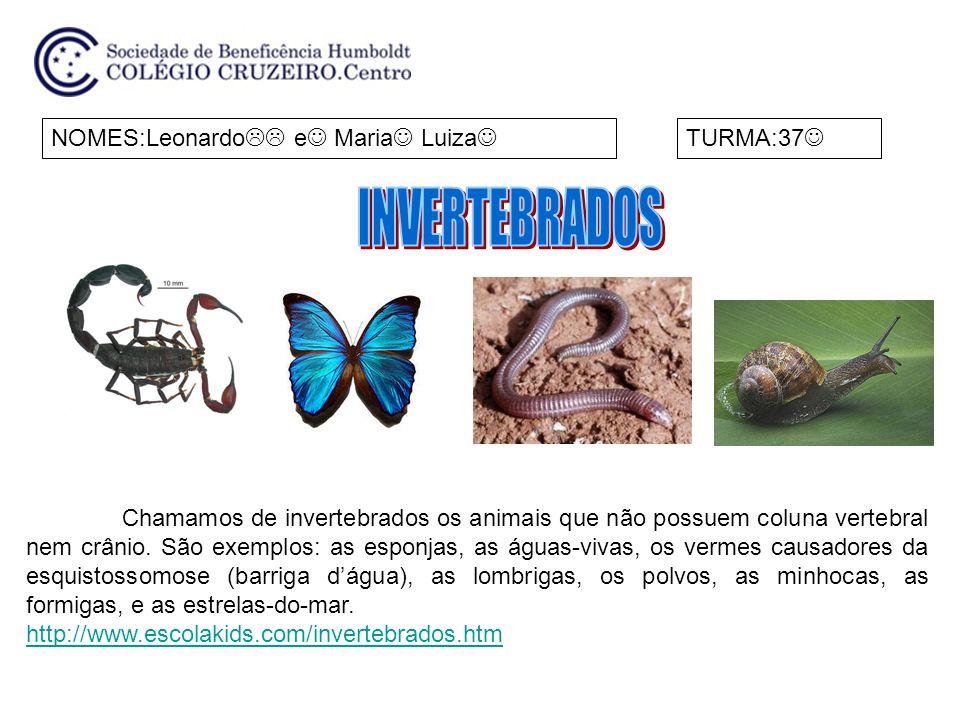 INVERTEBRADOS NOMES:Leonardo e Maria Luiza TURMA:37