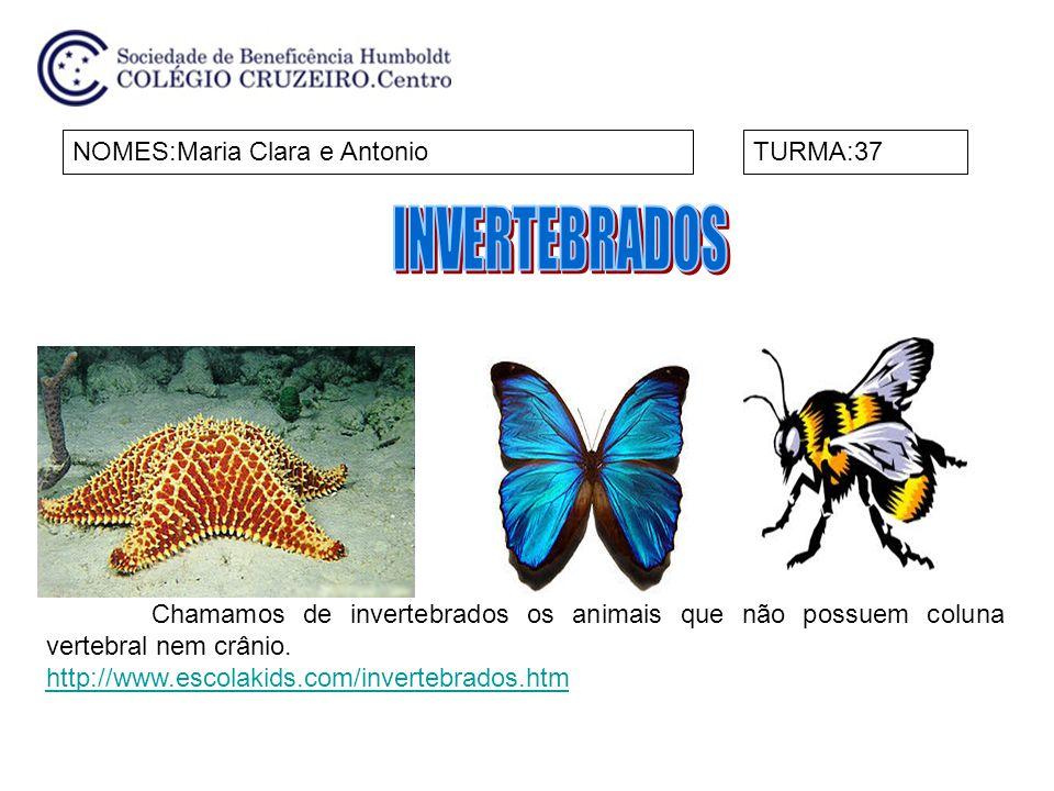 INVERTEBRADOS NOMES:Maria Clara e Antonio TURMA:37