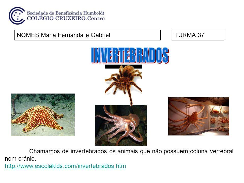 INVERTEBRADOS NOMES:Maria Fernanda e Gabriel TURMA:37