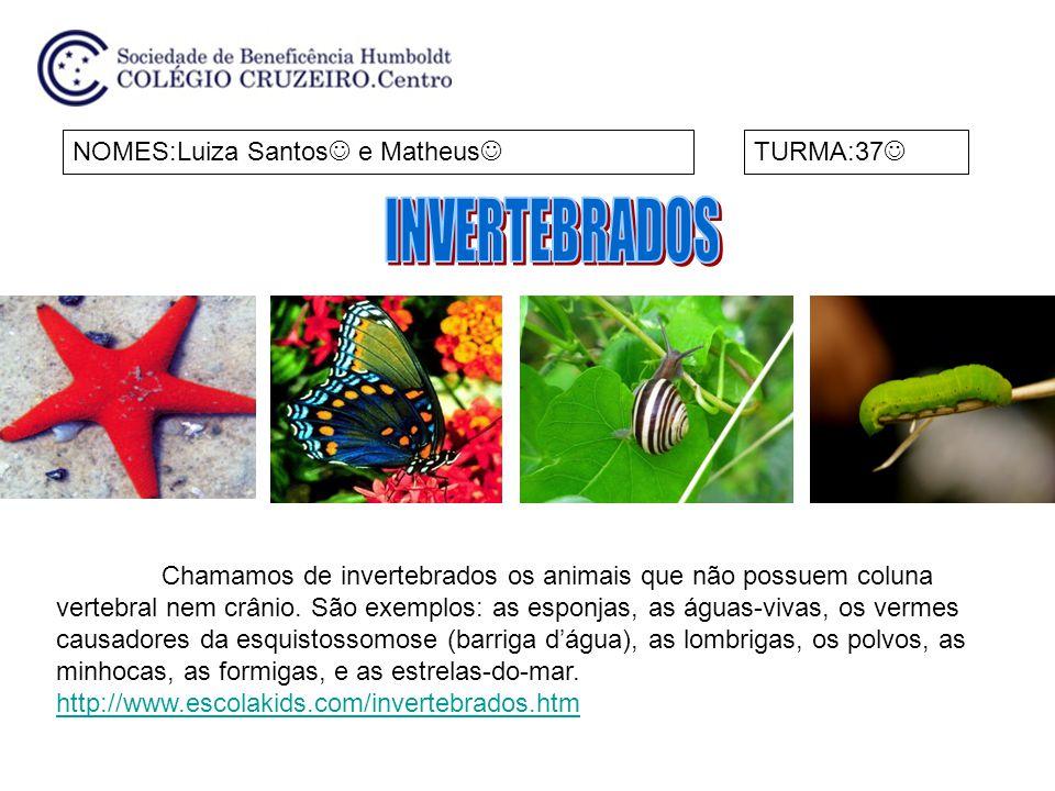 INVERTEBRADOS NOMES:Luiza Santos e Matheus TURMA:37