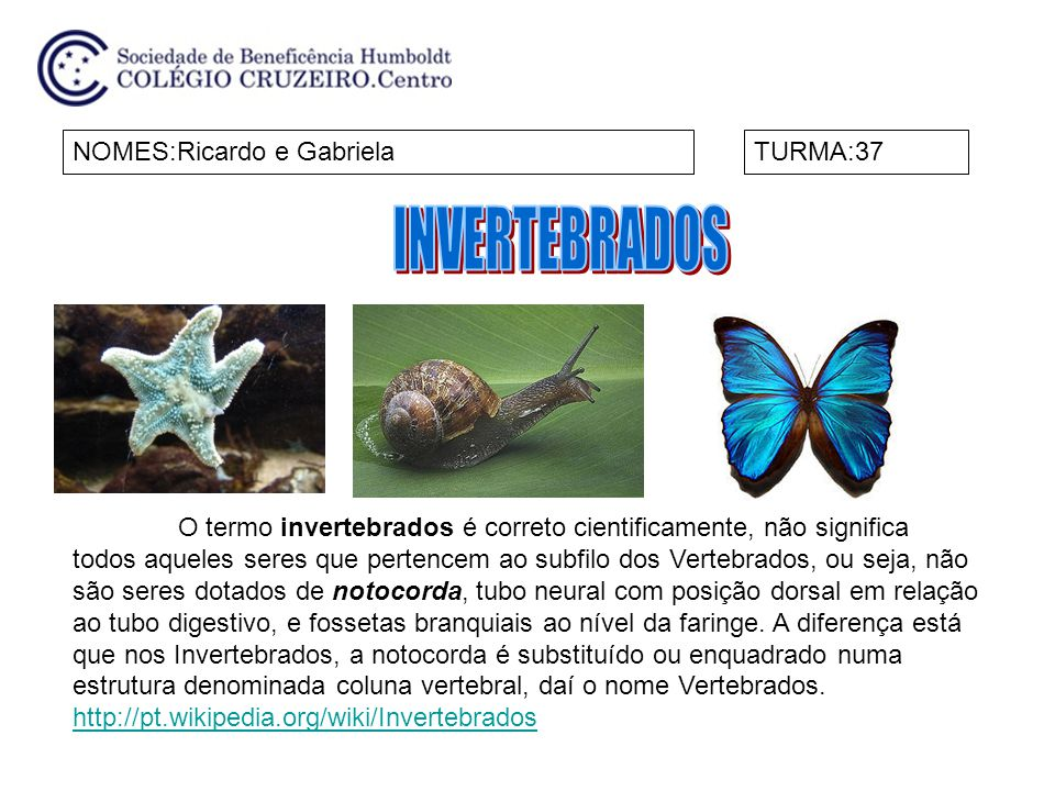 INVERTEBRADOS NOMES:Ricardo e Gabriela TURMA:37