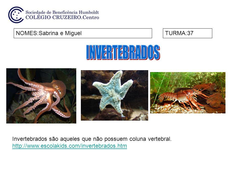 INVERTEBRADOS NOMES:Sabrina e Miguel TURMA:37