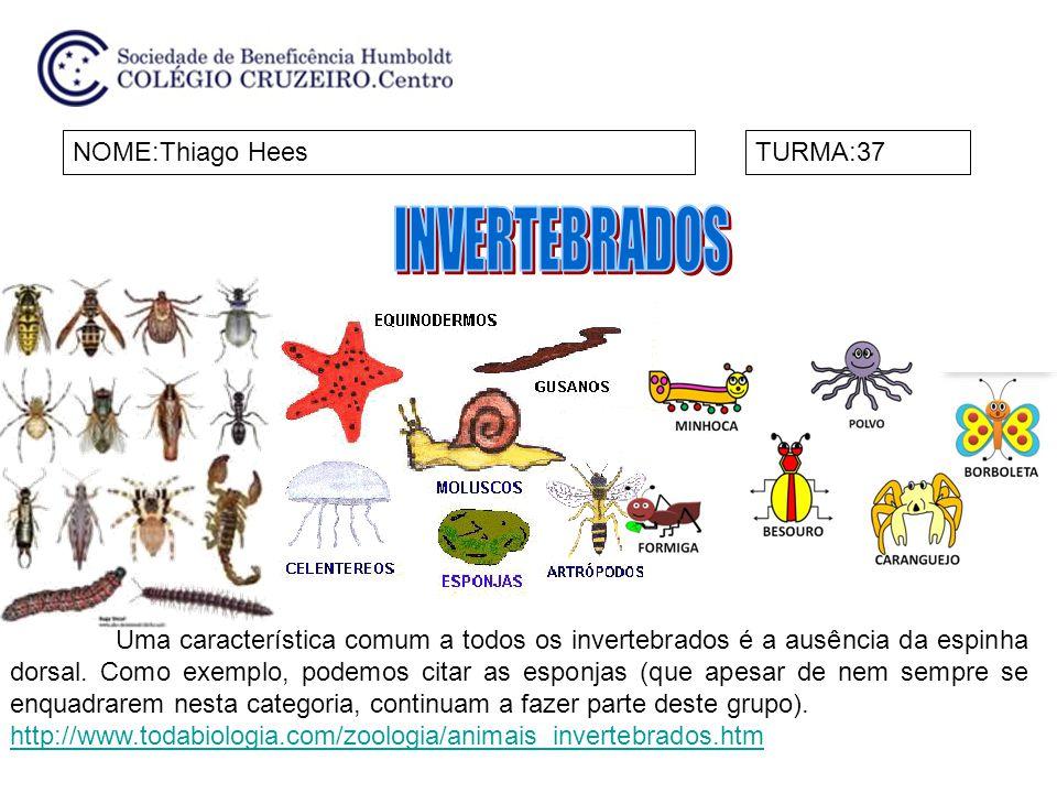 INVERTEBRADOS NOME:Thiago Hees TURMA:37