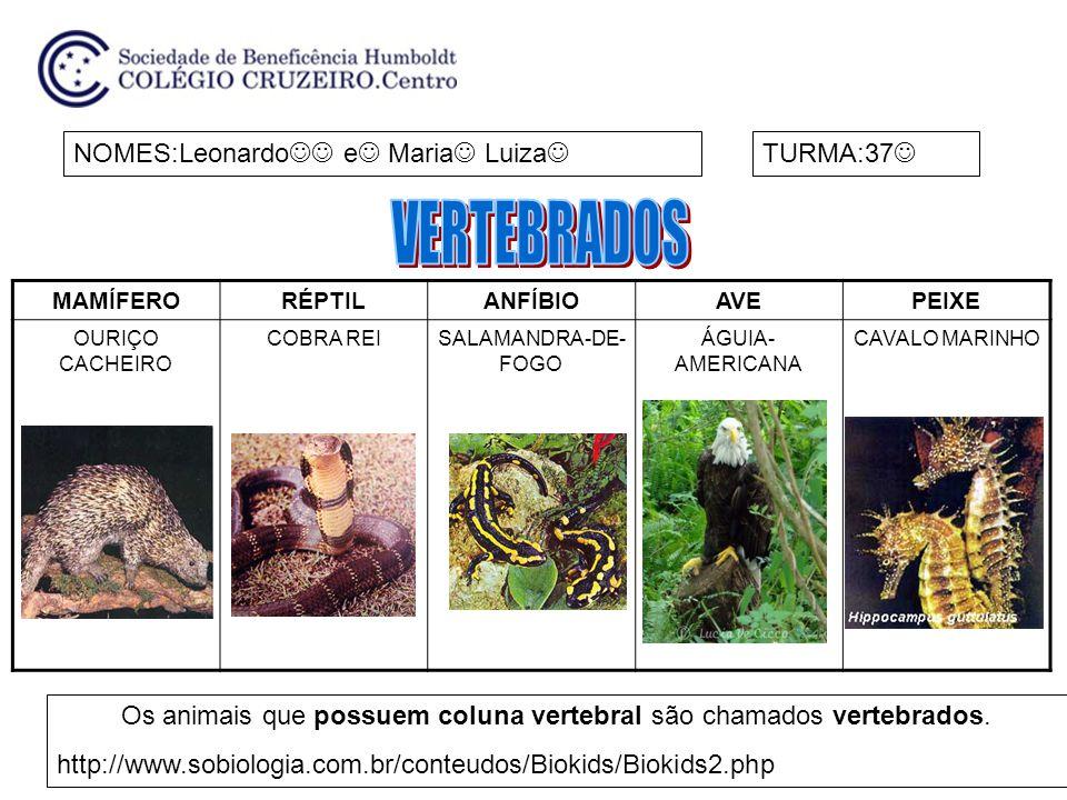 Os animais que possuem coluna vertebral são chamados vertebrados.