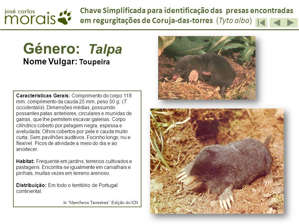 Chave Simplificada para identificação das presas encontradas em regurgitações de Coruja-das-torres (Tyto alba)