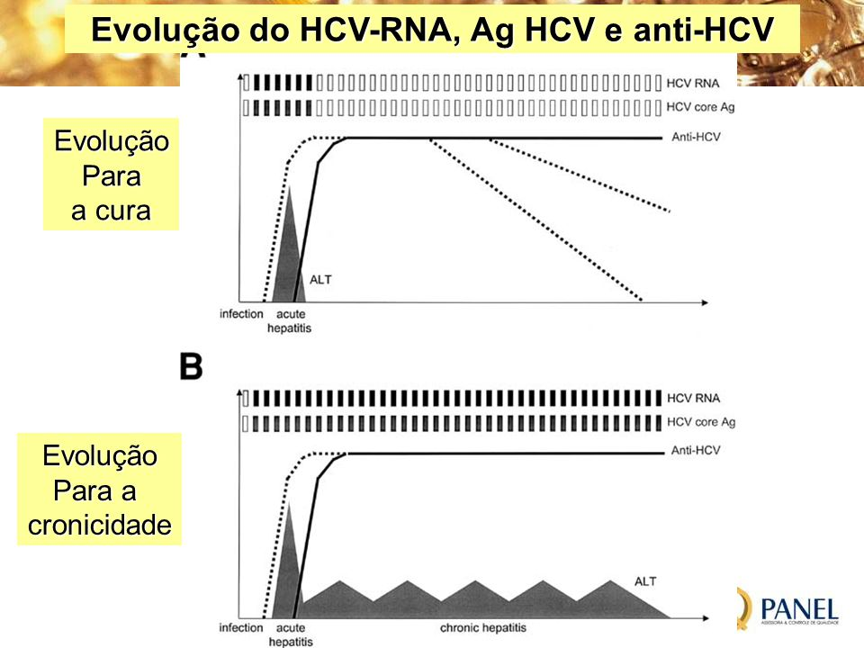 Evolução do HCV-RNA, Ag HCV e anti-HCV