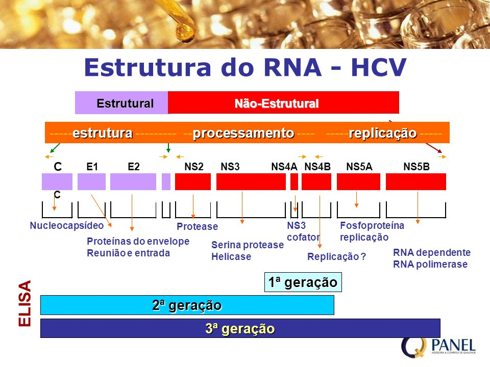 Estrutura do RNA - HCV ELISA
