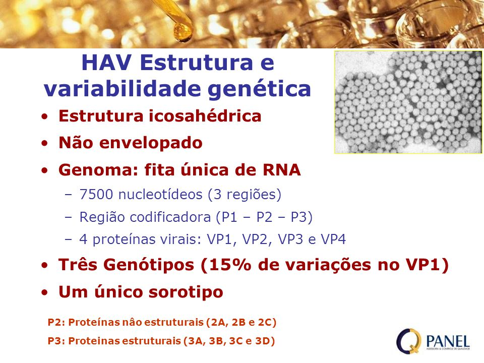HAV Estrutura e variabilidade genética