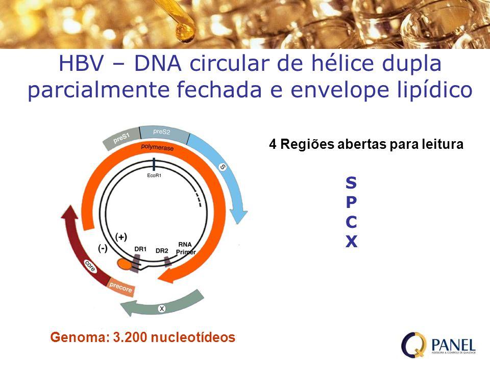 HBV – DNA circular de hélice dupla parcialmente fechada e envelope lipídico