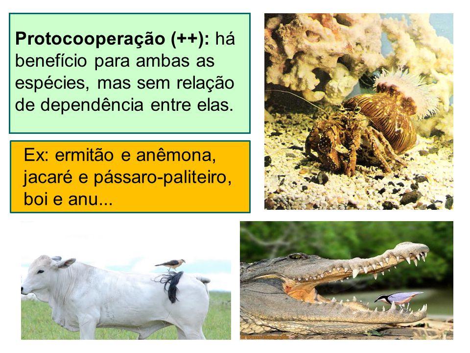 Protocooperação (++): há