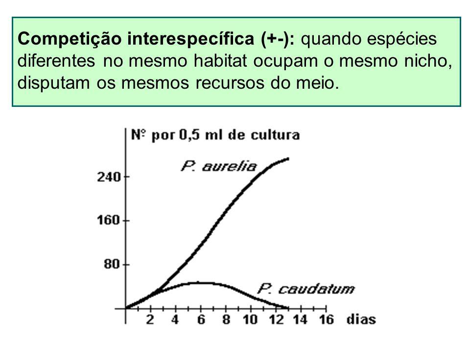 Competição interespecífica (+-): quando espécies