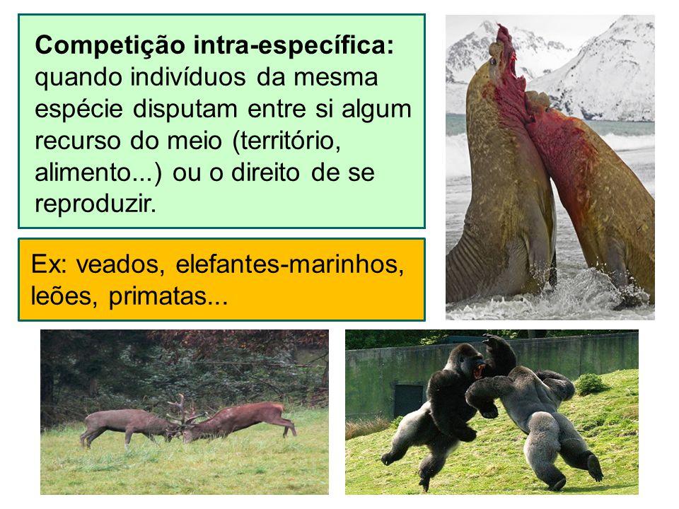 Ex: veados, elefantes-marinhos,