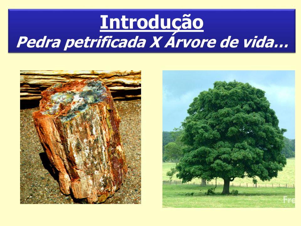 Pedra petrificada X Árvore de vida…
