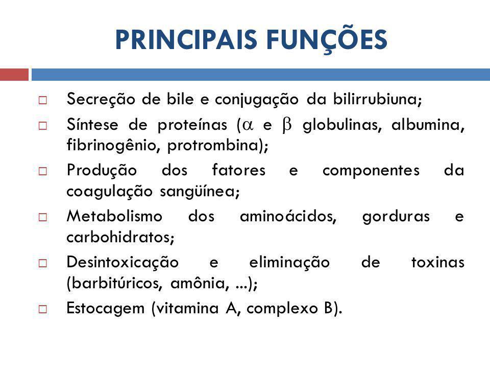 PRINCIPAIS FUNÇÕES Secreção de bile e conjugação da bilirrubiuna;