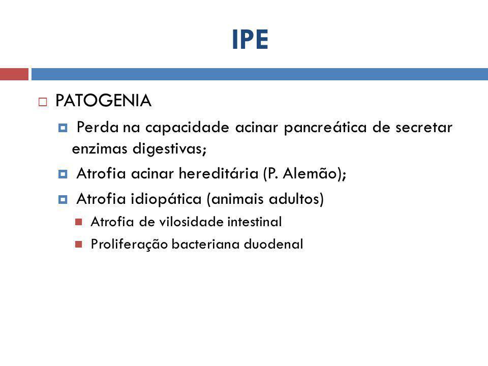 IPE PATOGENIA. Perda na capacidade acinar pancreática de secretar enzimas digestivas; Atrofia acinar hereditária (P. Alemão);