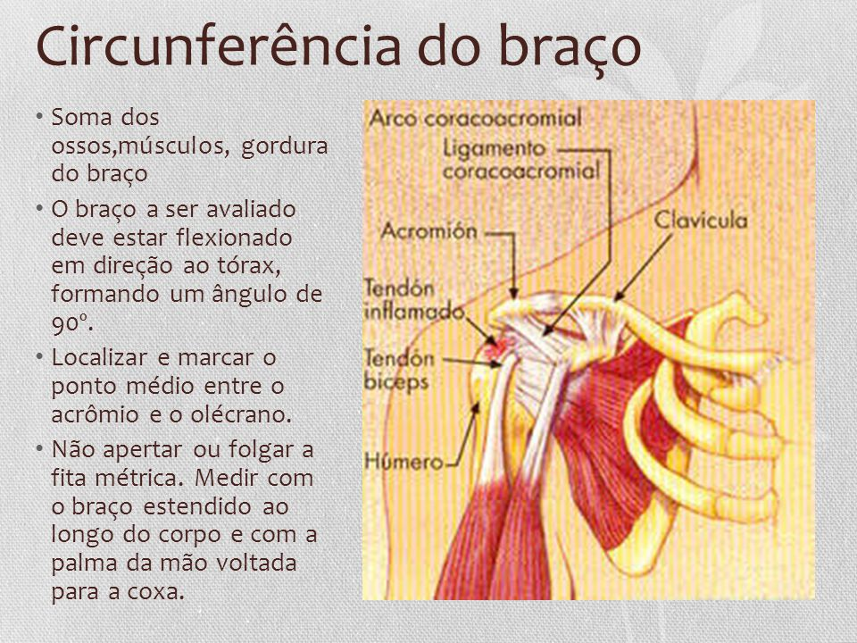 Circunferência do braço
