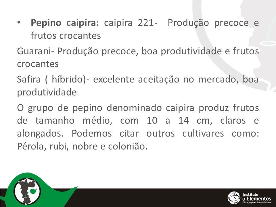 Pepino caipira: caipira 221- Produção precoce e frutos crocantes