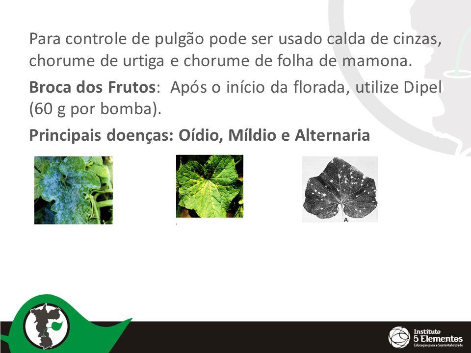 Para controle de pulgão pode ser usado calda de cinzas, chorume de urtiga e chorume de folha de mamona.