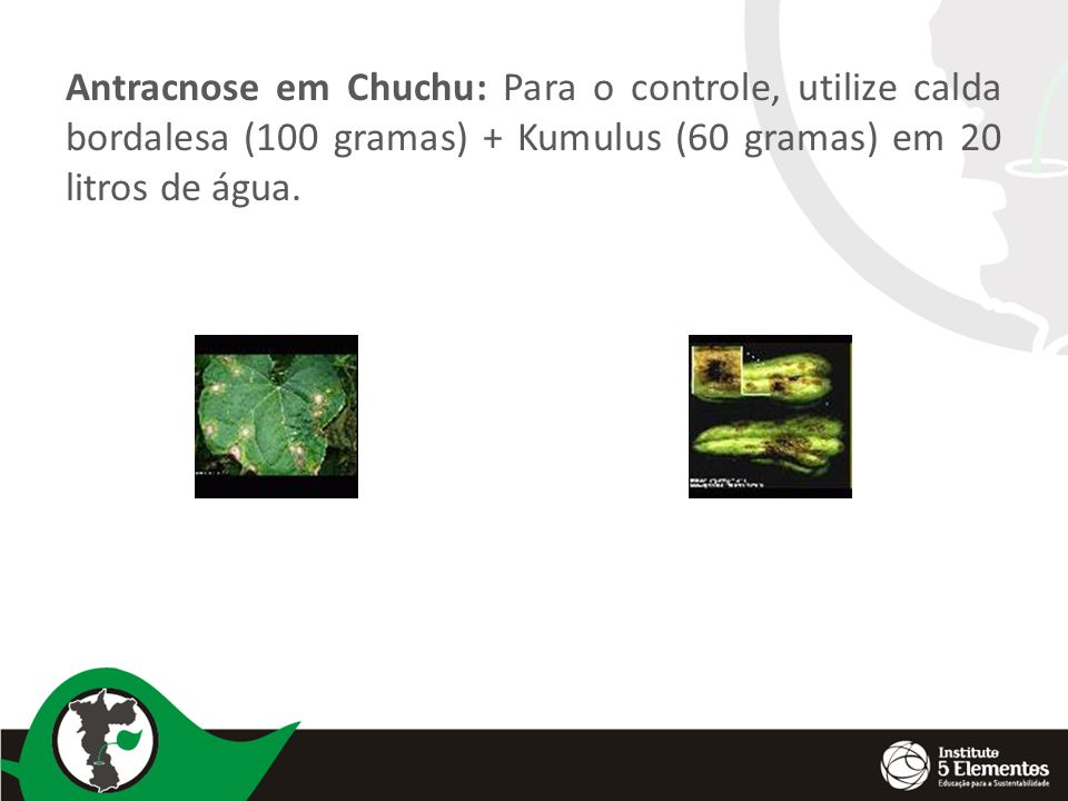 Antracnose em Chuchu: Para o controle, utilize calda bordalesa (100 gramas) + Kumulus (60 gramas) em 20 litros de água.