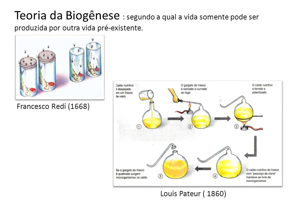 Teoria da Biogênese : segundo a qual a vida somente pode ser produzida por outra vida pré-existente.