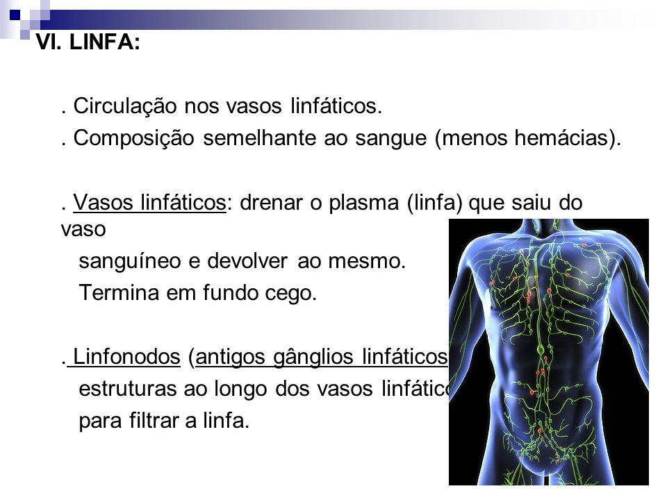 VI. LINFA: . Circulação nos vasos linfáticos. . Composição semelhante ao sangue (menos hemácias).