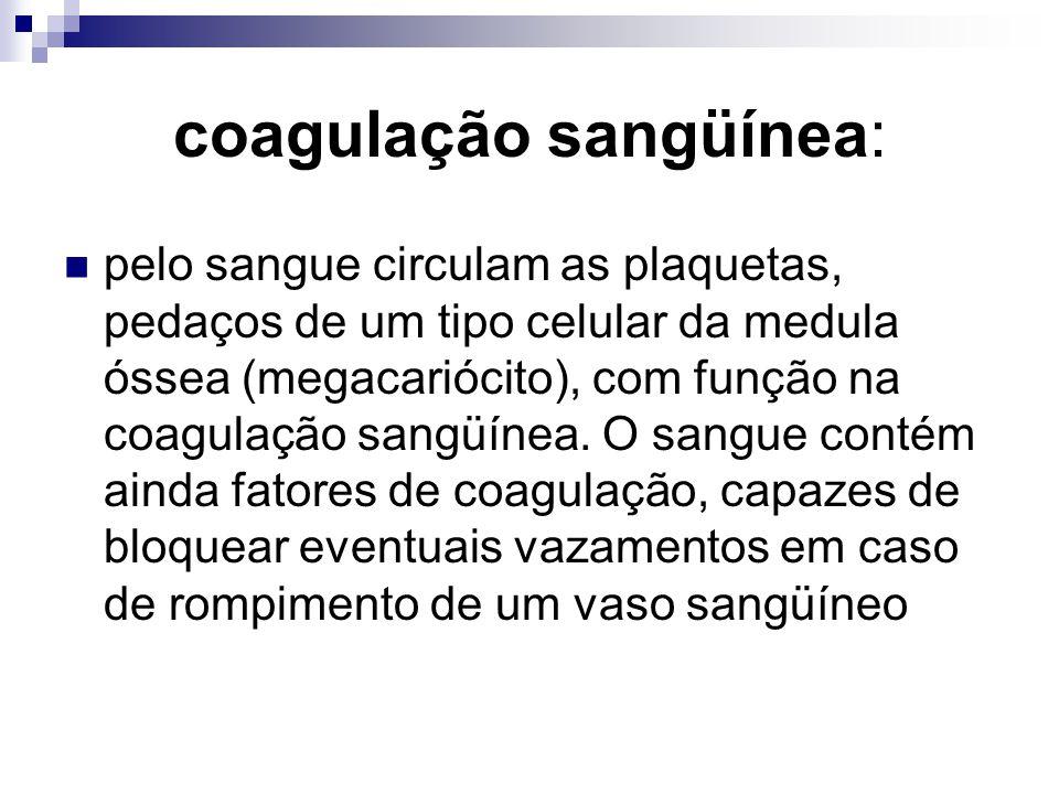 coagulação sangüínea: