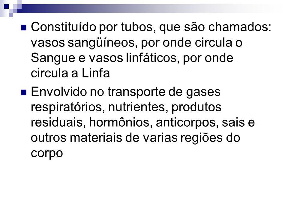 Constituído por tubos, que são chamados: vasos sangüíneos, por onde circula o Sangue e vasos linfáticos, por onde circula a Linfa