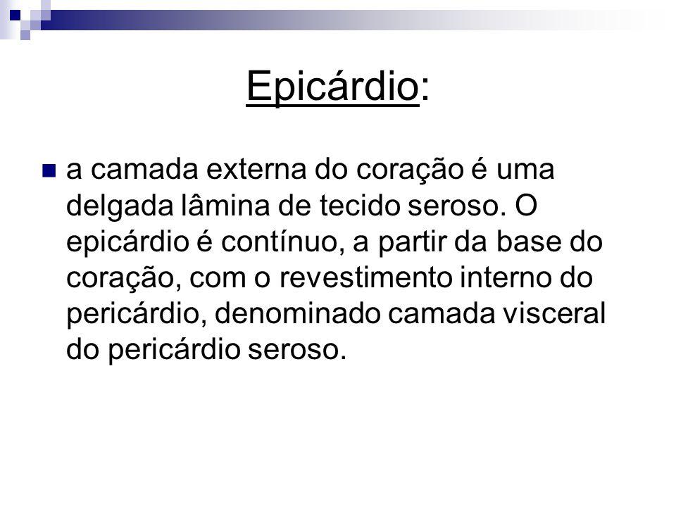 Epicárdio: