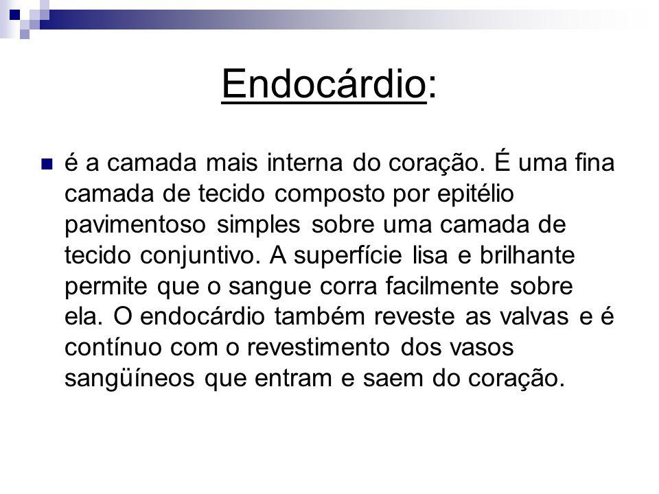 Endocárdio: