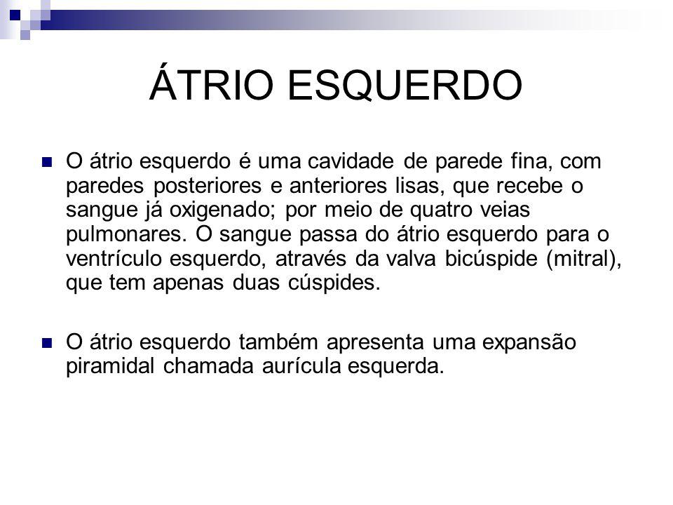 ÁTRIO ESQUERDO