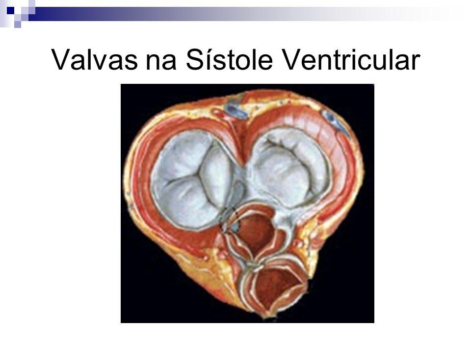 Valvas na Sístole Ventricular