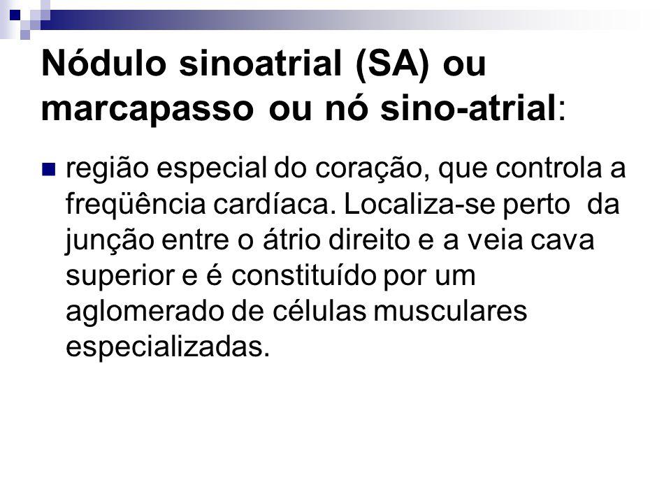 Nódulo sinoatrial (SA) ou marcapasso ou nó sino-atrial: