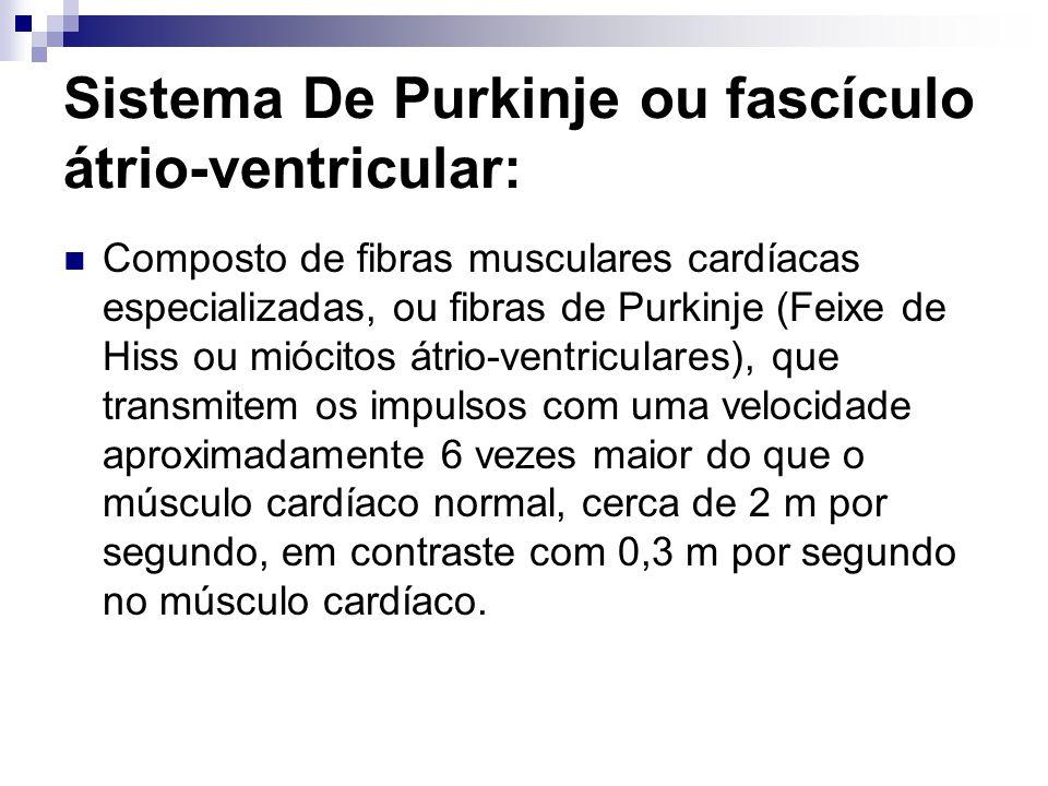 Sistema De Purkinje ou fascículo átrio-ventricular: