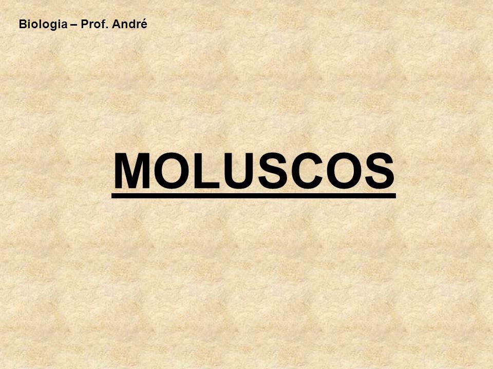 Biologia – Prof. André MOLUSCOS