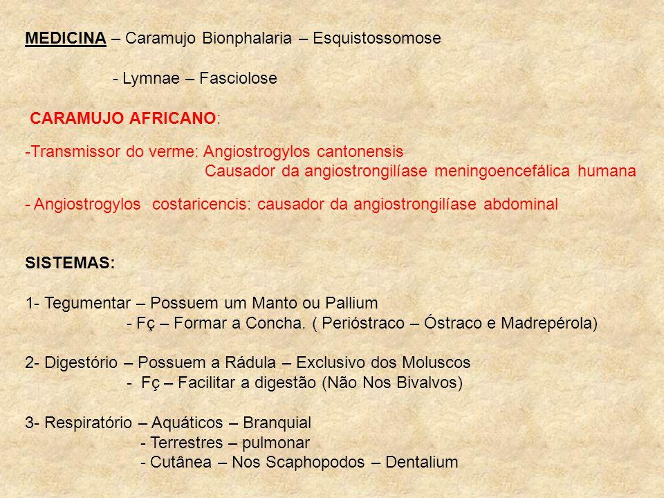 MEDICINA – Caramujo Bionphalaria – Esquistossomose