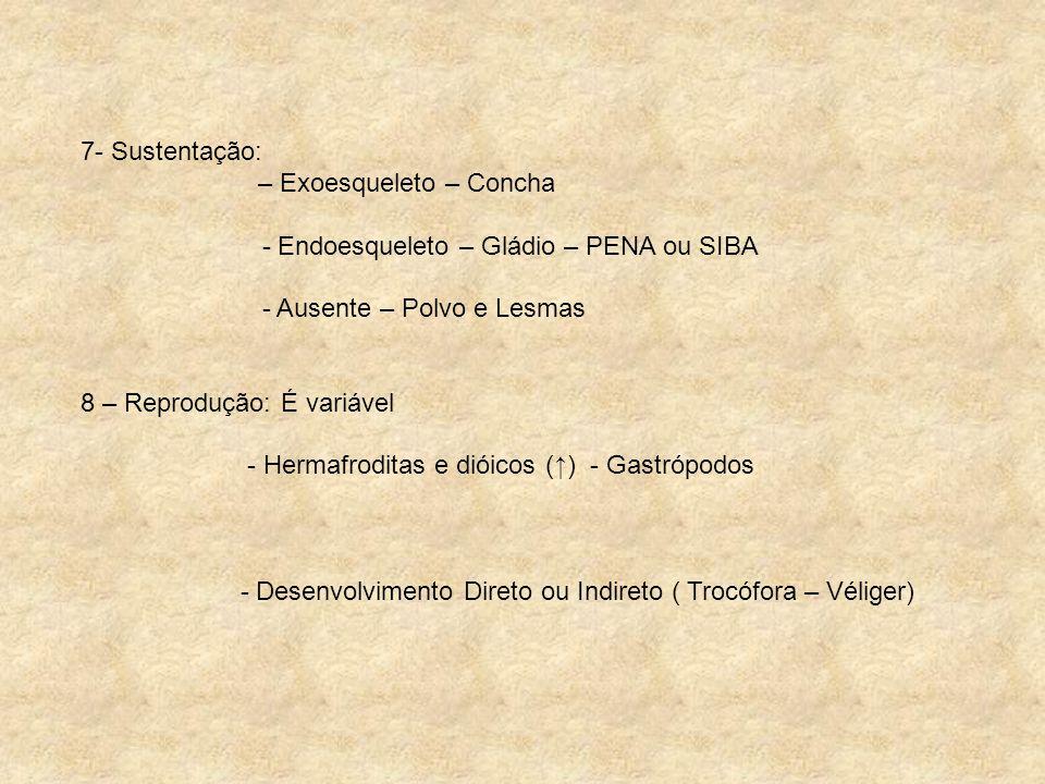7- Sustentação: – Exoesqueleto – Concha. - Endoesqueleto – Gládio – PENA ou SIBA. - Ausente – Polvo e Lesmas.