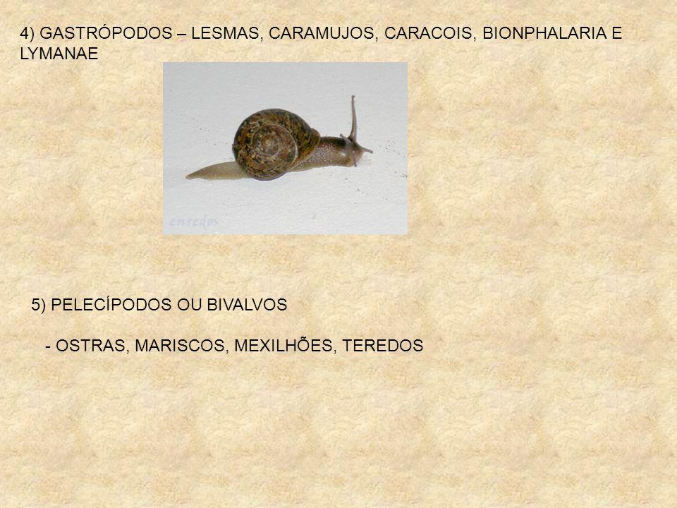 4) GASTRÓPODOS – LESMAS, CARAMUJOS, CARACOIS, BIONPHALARIA E LYMANAE