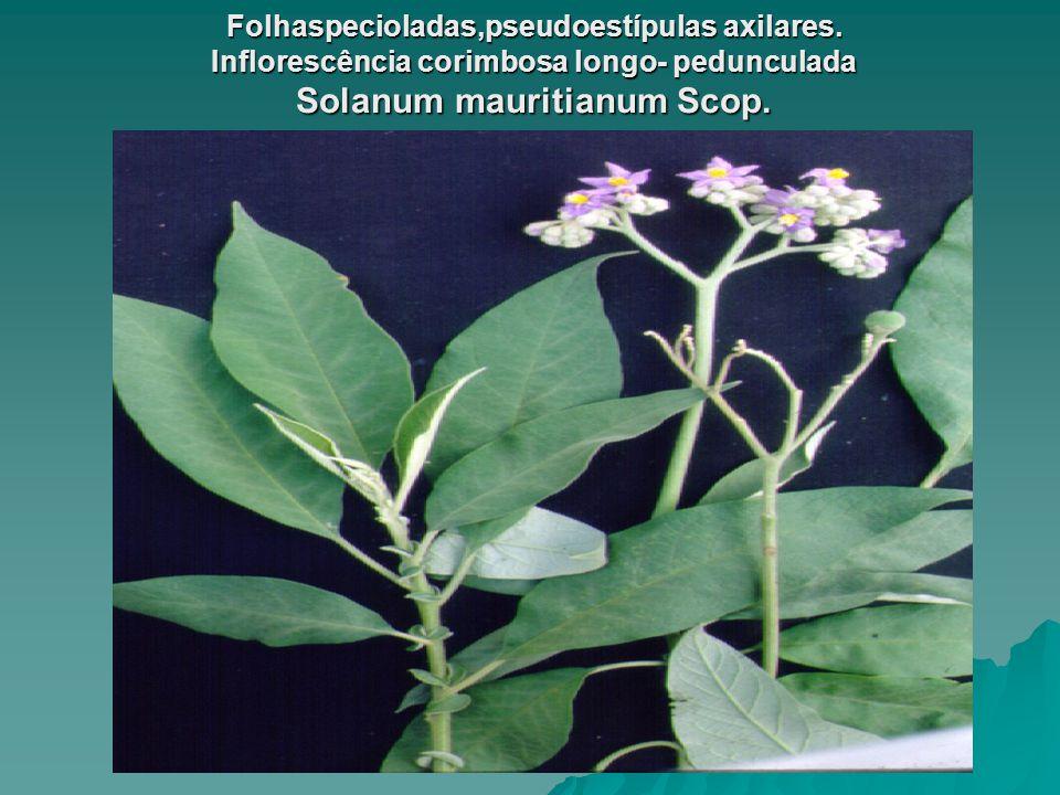 Folhaspecioladas,pseudoestípulas axilares
