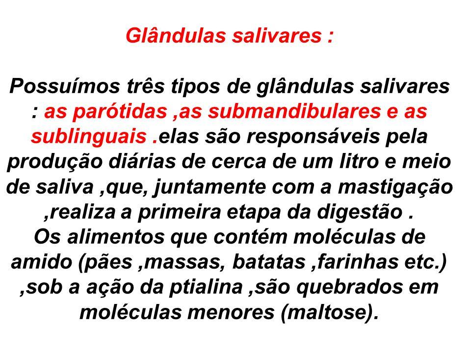 Glândulas salivares :