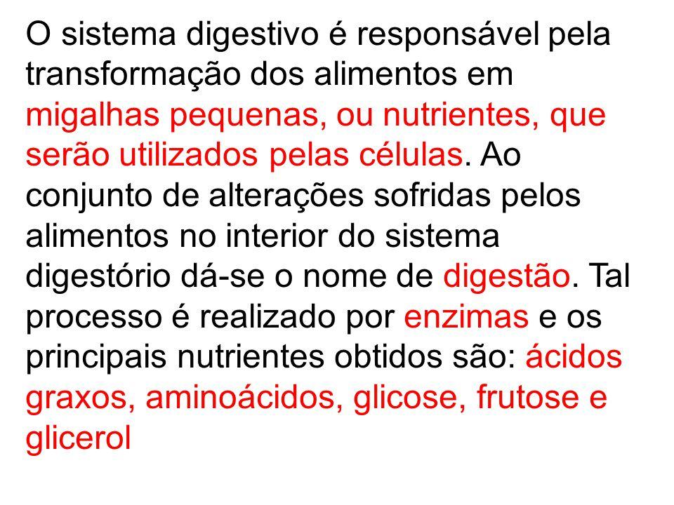 O sistema digestivo é responsável pela transformação dos alimentos em migalhas pequenas, ou nutrientes, que serão utilizados pelas células.