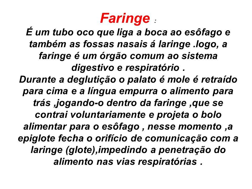 Faringe :