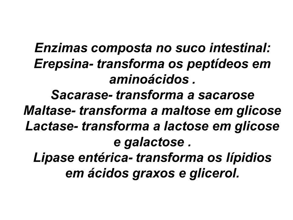 Lipase entérica- transforma os lípidios em ácidos graxos e glicerol.