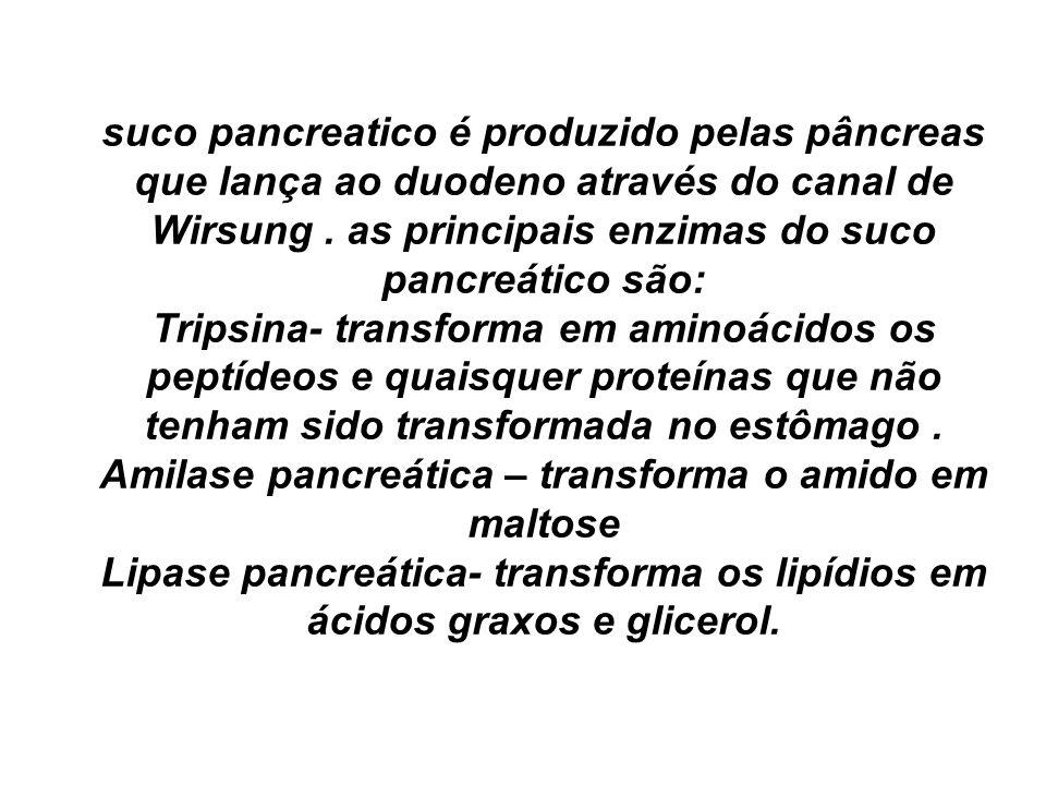 Amilase pancreática – transforma o amido em maltose